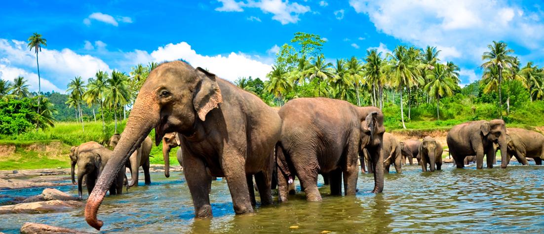 SriLanka_Shutterstock1