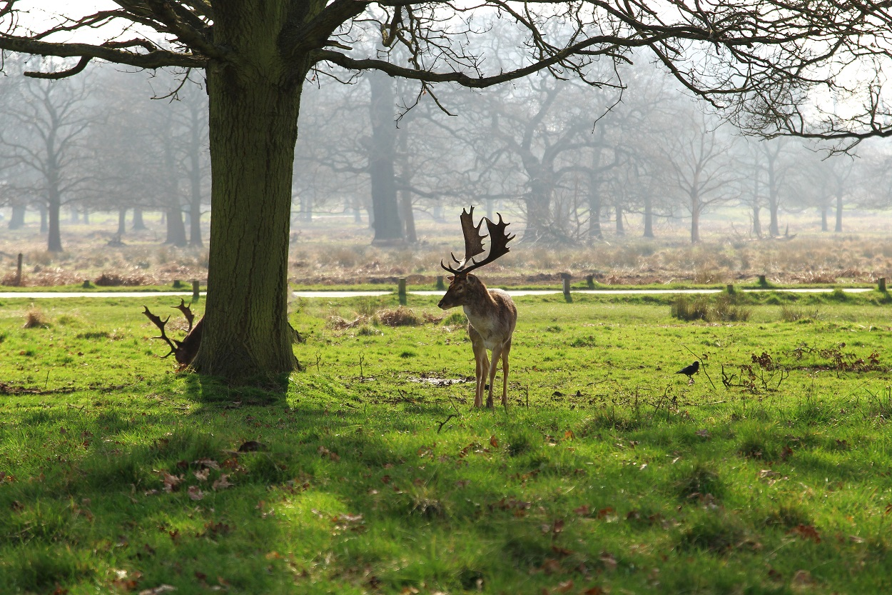 Richmond Park in London, UK can be an unforgettable experience. The massive Richmond Park, situated in London's historic Richmond upon Thames, has a great deal to offer visitors. As one of London's largest public parks, it offers a wide variety of activities for all ages. Richmond Park also offers a number of attractions and recreational facilities for people of all ages, including the Richmond Park Zoo and the Richmond Park Children's Zoo. The Richmond Park is one of the best places to go if you are looking for somewhere to take your family. In addition to strolling around the beautiful Botanical Gardens and exploring the Richmond Park Zoo, there are many other things for families to do in this lovely part of west London. Richmond Park is home to a number of museums and galleries, as well as several public parks and gardens. If you like horse riding, the Richmond Park Riding Estate is the place to go. If you love strolling through a beautiful park and taking in all its beauty, then you must visit the Richmond Park Tamsin Trail. The Richmond Park Tamsin Trail starts from the entrance of the Richmond Park Zoo. It covers several kilometers of excellent tracks. It winds its way through the forest to the Kingsley's Park, where you can find the remains of King Henry II and Anne Boleyn. A few kilometers later, you will reach the Richmond Park Horse Trail, where you will be able to see many animals. If you prefer country leisure and activities that combine countryside and urban living, you should visit the Richmond Park Lodge. The Richmond Park Lodge is located on the banks of the Richmond River and is a very convenient location for all kinds of tourists and travelers. In fact, the Lodge was established just thirty years ago. It is one of the only horse riding lodges in central London. The Richmond Park Lodge offers a wide range of activities and amenities for all ages, including trails for walking and cycling. While at the Richmond Park, you can also visit the Isabella Pl